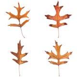 leaves för fall fyra Royaltyfria Foton