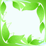 Leaves frame. Vector illustration showing a frame made of leaves, in shades of green and blue Stock Image