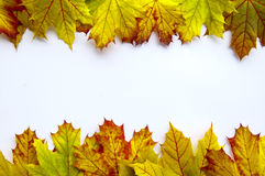 Leaves frame Stock Images