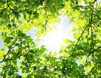 Leaves frame. Green leaves and sunny beams Stock Photography