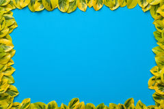 Leaves Frame on Blue Background Royalty Free Stock Image