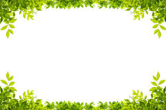 Leaves frame isolated. On white background Royalty Free Stock Images