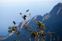 Leaves frame Na Pali Coast Royalty Free Stock Photo