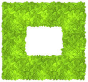 Leaves frame. Square frame formed by green leaves. EPS10 Royalty Free Stock Image