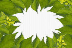 Leaves Frame,white space for text content Royalty Free Stock Photo