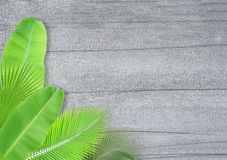 Leaves frame on wooden background Royalty Free Stock Photo