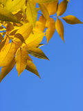 Leaves framework Royalty Free Stock Images