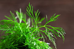 Leaves fresh dill with drops of dew Stock Photo