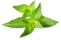 Leaves of fresh fragrant mint. Isolated on white background Stock Photo