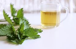 Leaves of fresh green nettle and a clear glass cup of herbal nettle tea on a white wood table .Medicinal plant. The stock images
