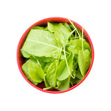 The leaves of fresh sorrel in red bowl isolated on white background. Top view closeup Stock Photography