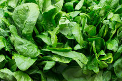 Leaves of fresh spinach Royalty Free Stock Photos