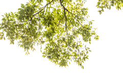 The leaves Stock Photography