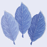 Leaves in the frost  illustration Royalty Free Stock Photos