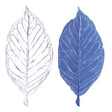 Leaves in the frost  illustration. Realistic leaves  illustration. Autumn frozen fallen leaves.The veins on the leaves of plants Stock Image