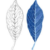 Leaves in the frost  illustration. Leaves in the frost and the silhouette of the veins on a leaf. Template for your design Stock Photography