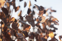 Leaves. In the frost in the sunshine Royalty Free Stock Photos