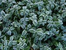 Leaves Frost Texture Royalty Free Stock Photos