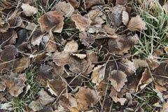 Leaves frozen Stock Photos