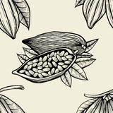 Leaves and fruits of cocoa beans. Stock Image