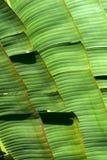 leaves gömma i handflatan royaltyfri foto