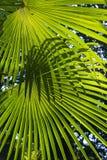 leaves gömma i handflatan Royaltyfri Fotografi