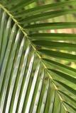 leaves gömma i handflatan arkivbild