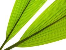 leaves gömma i handflatan Fotografering för Bildbyråer
