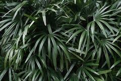 leaves gömma i handflatan tropiskt arkivfoto
