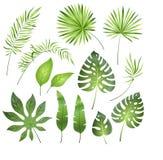 leaves gömma i handflatan tropiskt Exotiskt blad för djungel att gömma i handflatan plumeria för kunglig ormbunke För paradisstra stock illustrationer