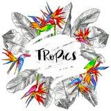 leaves gömma i handflatan tropiskt Rund illustration för djungel med fågeln av paradisblomman, banansidor mall för restaurang för stock illustrationer