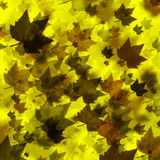 Leaves Galore - Fall Stock Images