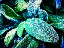 Leaves. In the garden Royalty Free Stock Photography