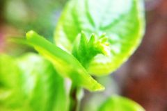 Leaves in garden Royalty Free Stock Photo