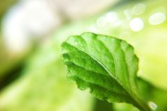 Leaves in garden. Leaves leaf plant in garden Royalty Free Stock Images