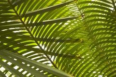 leaves gömma i handflatan Arkivbilder