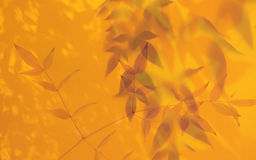 Leaves in golden light Stock Photos