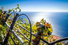 Leaves of grape in vineyard on background sea in Nocelle village - Amalfi Coast royalty free stock image