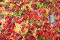 Leaves_1 royalty free stock photos