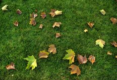 Leaves and grass Royalty Free Stock Photos