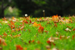 Leaves in grass Stock Photos
