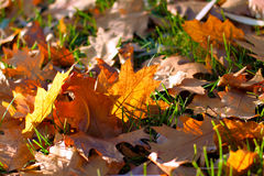Leaves on the grass. Background of fallen leaves on the grass stock photo