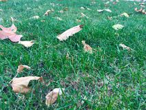 Leaves on grass at autumn. Leaves on grass at autmn royalty free stock photography