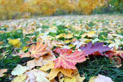 Leaves on grass in autumn park Royalty Free Stock Image