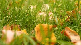 Leaves on the grass stock video footage