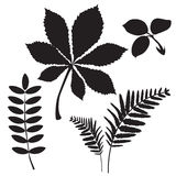 Leaves Of Grass. Colourless Picture. Leaves Falling. Leaves Background. Black Silhouettes. Tree Leaves. Stock Images