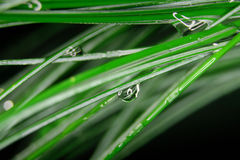 Leaves of grass and drops Royalty Free Stock Photos