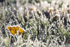 Leaves and grass in the frost October morning Royalty Free Stock Images