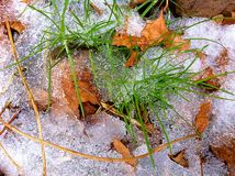 Leaves, grass, ice Royalty Free Stock Image
