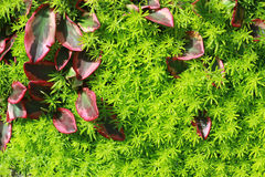 Leaves on the grass Stock Photography